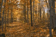 Autumn trail track. Sunny day. autumn trail track Royalty Free Stock Photos