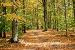 Autumn Trail Through the Woods Royalty Free Stock Image