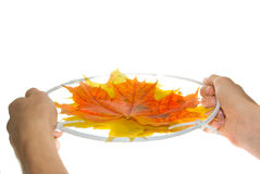 Autumn trampoline Stock Images