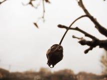 Autumn Transition Imagen de archivo