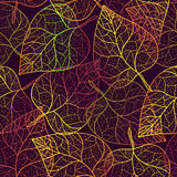 Autumn transparent leaves pattern background. Royalty Free Stock Photos