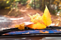 Autumn Travel Stock Images