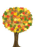 Autumn tree. Isolated on white Royalty Free Stock Photography