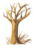 Autumn tree. Hand drawn tree in the autumn Stock Photography