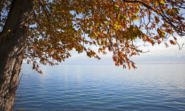 Autumn tree. Horizon Over Water with a tree in autumn Royalty Free Stock Image