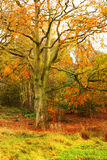 Autumn tree. In a beautiful autumnal park Stock Photos