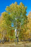 Autumn_tree Photo stock