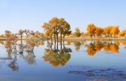 Autumn tree. By a mirror river,shoot at xijiang,China stock photography