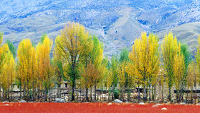 Autumn tree. In sichuan,china Stock Photos