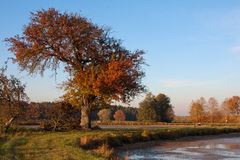 An autumn tree. In a sunny day Royalty Free Stock Photos