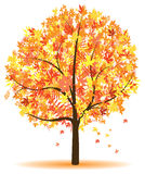 Autumn tree. A colorful autumn abstract tree Stock Images