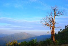 Autumn and tree. The tree without leaf stand alone on the mountain Stock Image