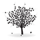 Autumn tree. Silhouette of beautiful autumn tree for your design Stock Photos
