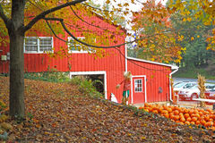 Autumn Tree. View from a local farm market selling pumpkins and other fruits and vegetables Stock Image