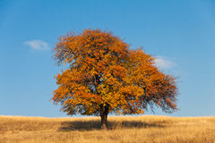 Autumn tree. Walk in the woods and search for suitable catching photo Stock Photo