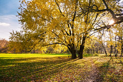 Autumn tree. And the sun's rays Stock Photography
