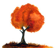 Autumn tree. Watercolor autumn tree isolated on white background Royalty Free Stock Image