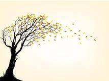 Autumn tree Royalty Free Stock Photography