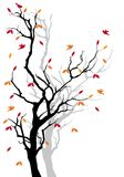 Autumn tree,  Stock Photography
