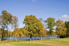 Autumn tree Royalty Free Stock Photos