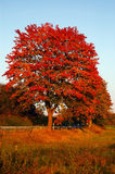 Autumn tree. Countryside in Germany in fall, shot in the late afternoon sun stock images