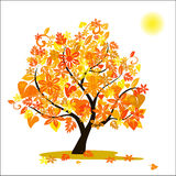 Autumn Tree Images stock