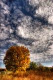 autumn tree Royaltyfri Bild
