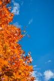 Autumn Tree Imágenes de archivo libres de regalías