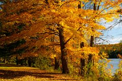 Autumn tree. An autumn maple tree beside Philippe lake in Gatineau Park, Hull, Canada Stock Photography