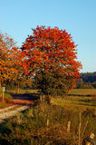 Autumn tree. Countryside in Germany in fall, shot in the late afternoon sun stock image