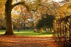 Autumn tree. Tree in autumn sunligt stock photo