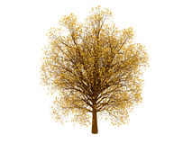 Autumn tree. 3d render of autumn tree. Isolated on white background Stock Photography