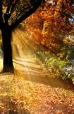 Autumn tree. With rays of light stock image