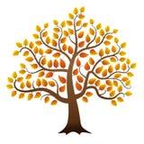 Autumn tree. Abstract vector autumn tree on white background vector illustration