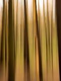 Autumn tree abtract Royalty Free Stock Photos