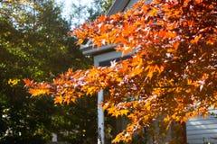 Autumn Tree ad alba fotografia stock libera da diritti