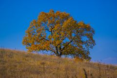 Autumn tree against the blue sky Royalty Free Stock Image