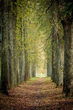 Autumn tree alley Royalty Free Stock Image