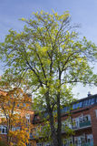 Autumn tree and apartments Royalty Free Stock Images
