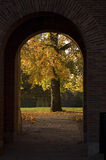 Autumn Tree through archway. An autumn tree through an old archway. Afternoon sunlight, no flash stock image