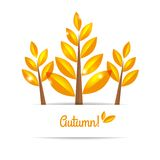 Autumn tree with autumn leaves Stock Photo