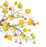Autumn tree background. Autumn yellow tree background illustration Stock Photos
