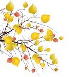 Autumn tree background. Autumn yellow tree background illustration vector illustration