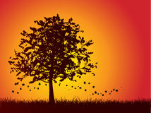 Autumn tree background. Silhouette of an autumn tree with leaves falling Stock Image