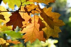 Autumn tree background Stock Photo