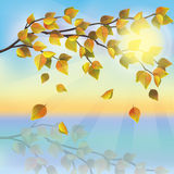 Autumn tree on background of sunset Stock Photos