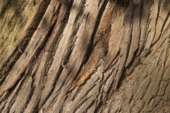 Autumn tree bark Royalty Free Stock Photo