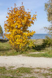 Autumn Tree. Beautiful autumnal scenery ,Tallinn City,Estonia Royalty Free Stock Photo