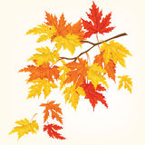 Autumn tree with beautiful flying leaves . Autumn card.Vector illustration. Stock Photo