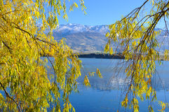 Autumn tree with beautiful nature in New Zealand. Autumn can not only be one of the most gorgeous times to visit New Zealand but also one of the quietest times Stock Images